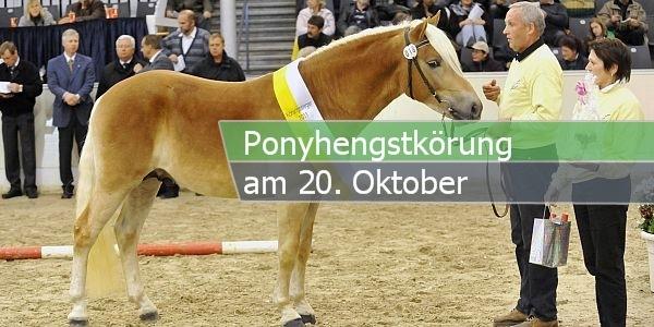 ponyhengskörung paint