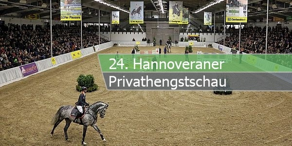 privathengstschau paint